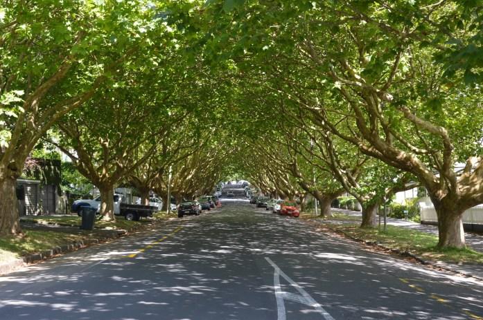Picton Street, Ponsonby neighborhood, Auckland, New Zealand
