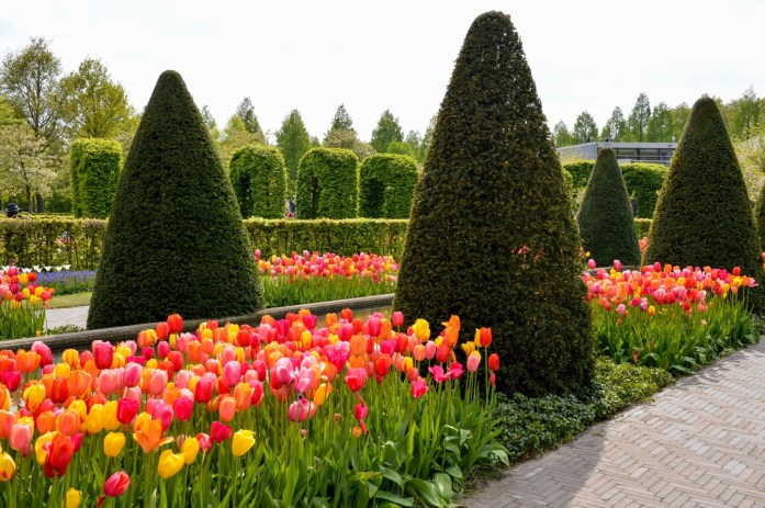 Tulips, Keukenhof, the Netherlands