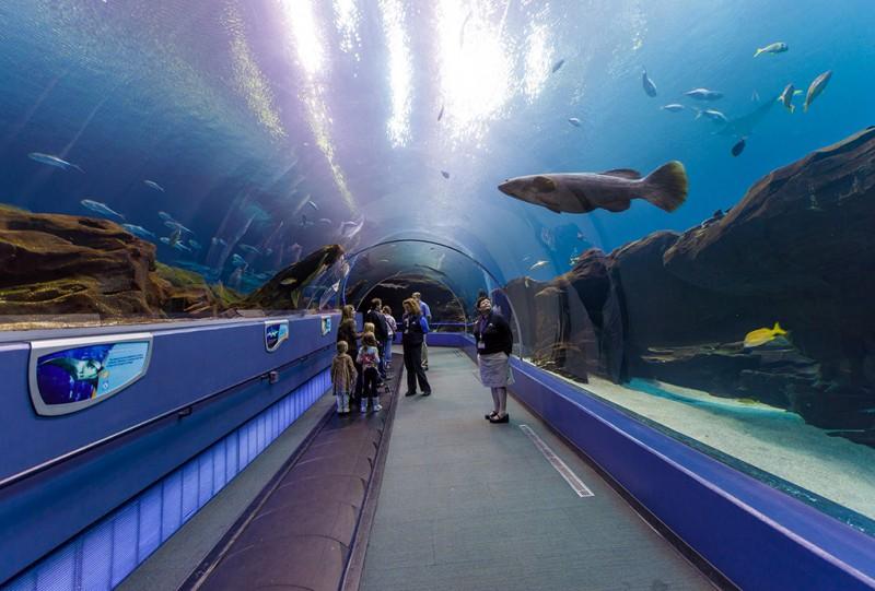 Atlanta Georgia Aquarium 0866 Copy