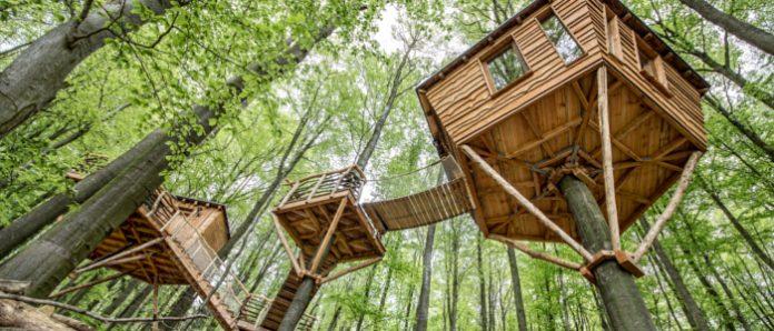 Baumhaushotel: außergewöhnlicher Urlaub