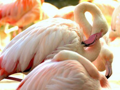 Der Dubliner Zoo ist Teil des berühmten Phoenix Parks