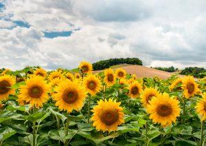Vorbei an Deutschlands vielseitigen Landstrichen
