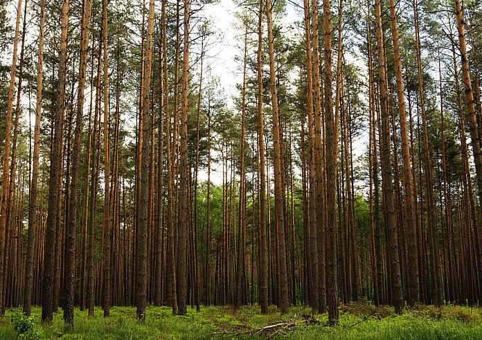 Wälder soweit das Auge reicht auf dem Radweg Berlin Kopenhagen