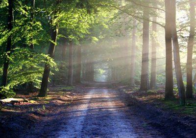 Spessart-Wald