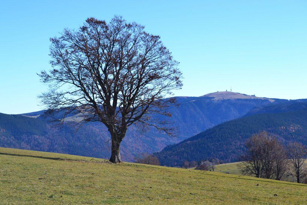 Top 10 Schwarzwald: Feldberg