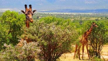 Kenia – duma Afryki