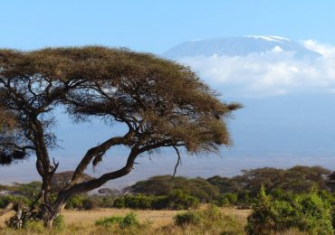 kilimanjaro-720845_1920