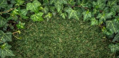 Rośliny mogą skutecznie zatrzymywać wirusy. Polscy naukowcy chcą udowodnić, że działają również na SARS-CoV-2