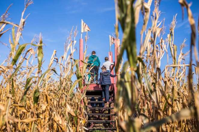 Twin Cities Harvest Festival & Maze