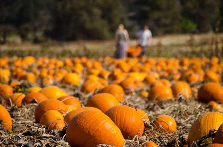 Fall Activities In MN – Discover Minnesota Best Activities in Autumn