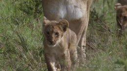 Hemingways Afrika: die Serengeti
