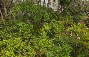 Brasilien: Eintauchen in den Regenwald