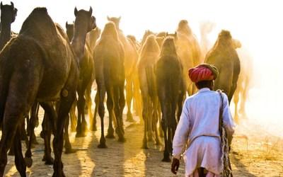 Pushkar Fair: A Colourful Carnival