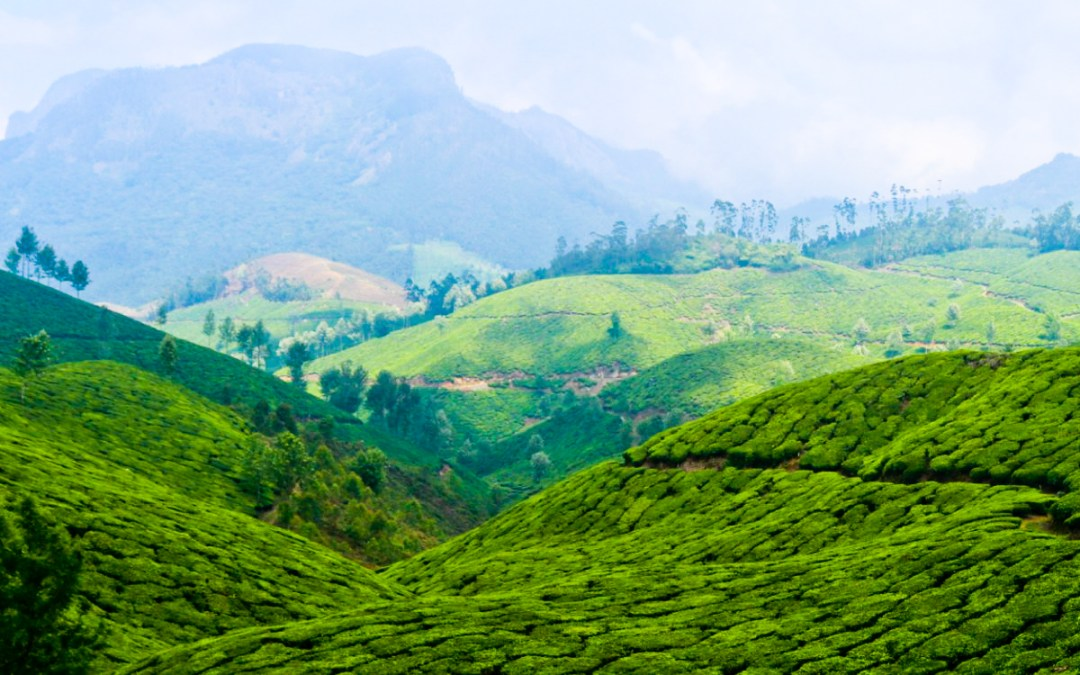 Photo Story: These Breathtaking Photographs Of Munnar Will Make You Want To Travel Immediately