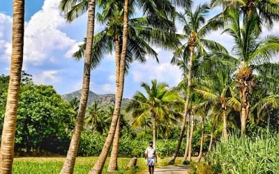 Padavedu in Tamil Nadu: The Finest Example of A Progressive Village