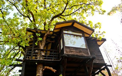 Pench Tree Lodge by Pugdundee Safaris: A Must Have Experience