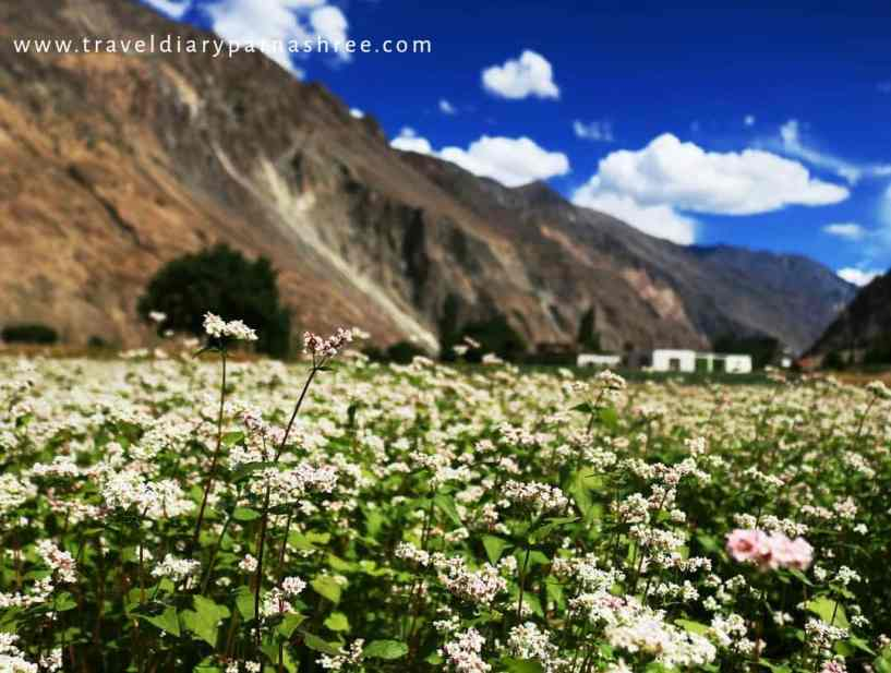 Nubra Valley: 3 Day Itinerary and Travel Guide for Sightseeing