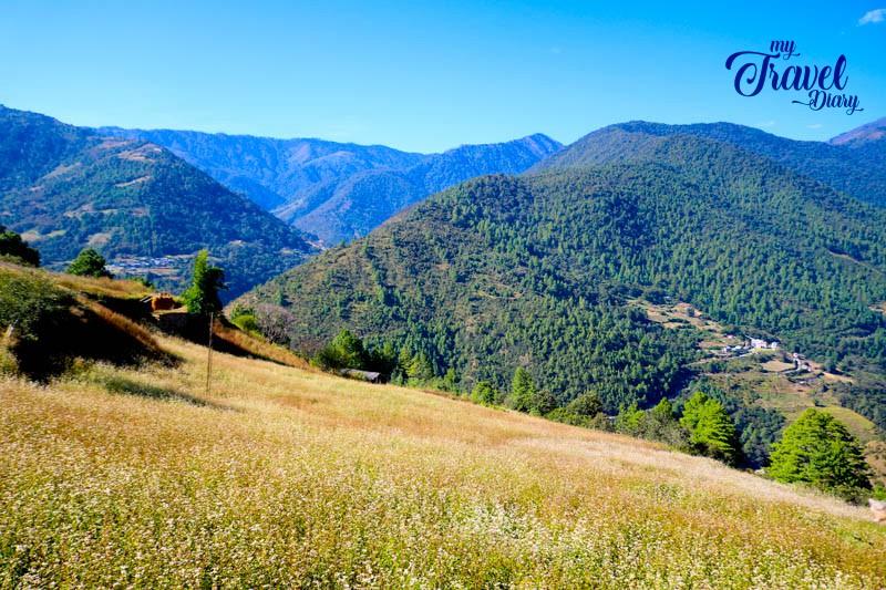 Buckwheat field with a breathtaking backdrop in Dirang Valley, Arunachal Pradesh
