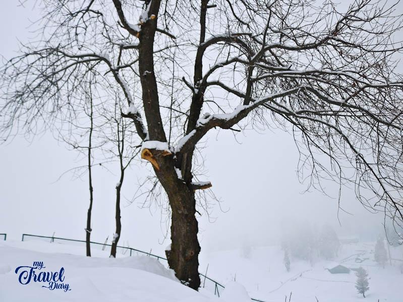 A snowy day in Gulmarg