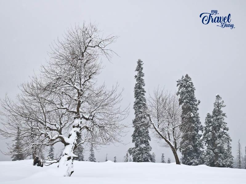 Dream like landscape of Gulmarg in winter