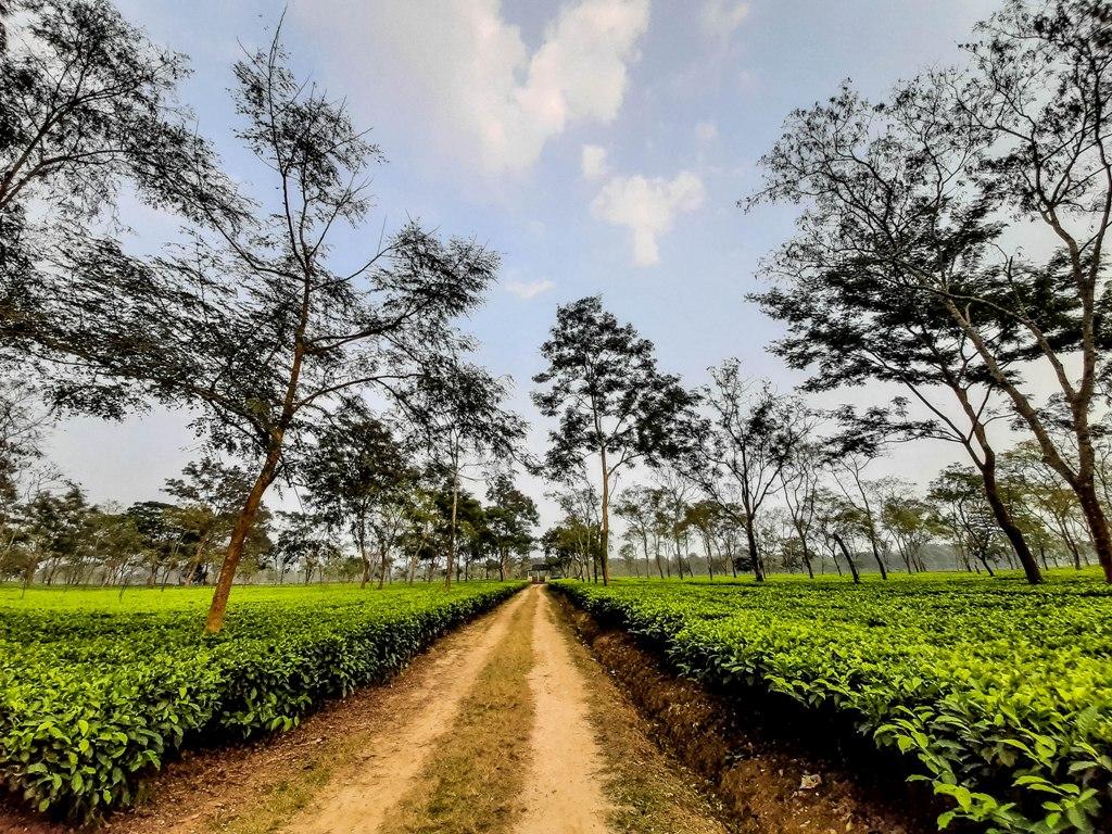 Adabari Tea Estate in Balipara, Assam