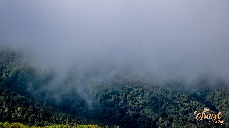 Dense forest in Dirang Valley