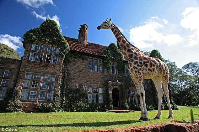 Giraffe manor house (3)