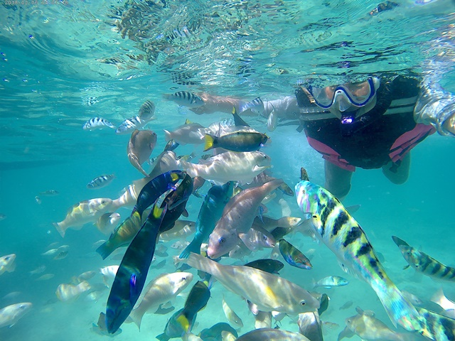 fish feeding dan snorkeling di Gili Air