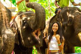 one day tour lombok elephant park pantai nipah
