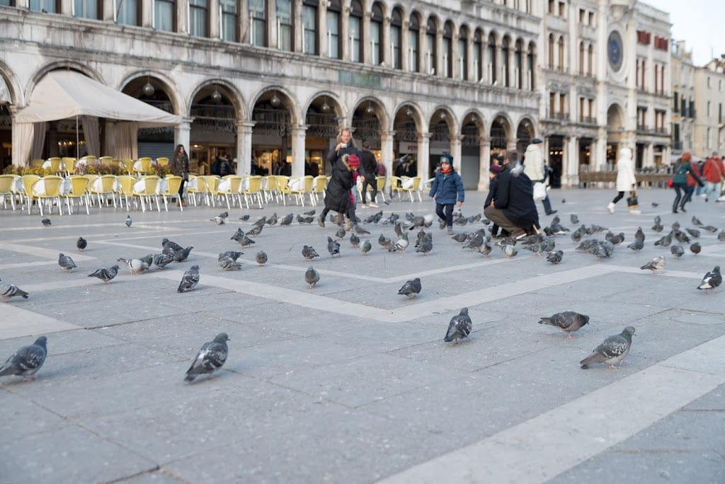 St. Mark's square Venice with pigeons