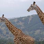 Experience Rwanda Wildlife Tour - Akagera National Park