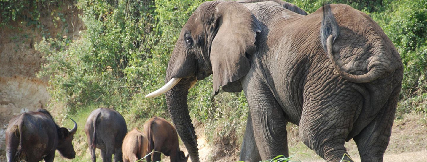 Queen Elizabeth National Park Safari Tour