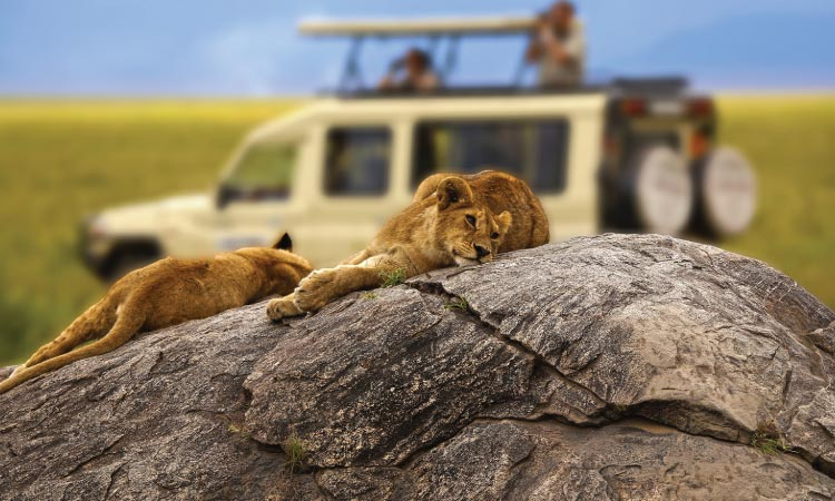 Tanzania Safari Destinations | Travelers Link Africa Safaris