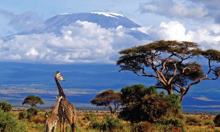 Climb Kilimanjaro Tanzania Safari Destination