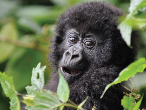 Uganda Gorillas & Wildlife Safaris