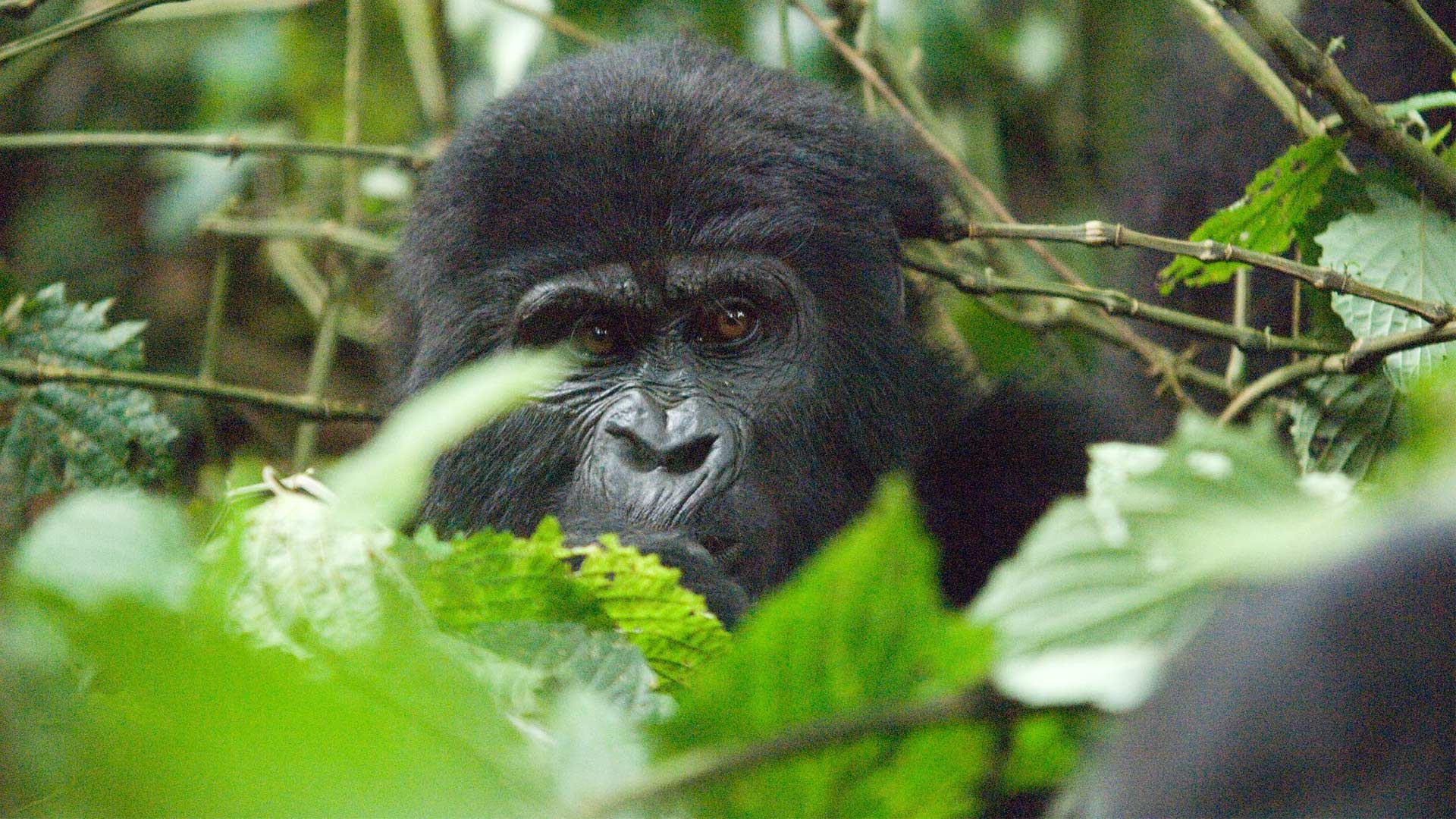 Scheduled Uganda Primates and wildife Safari 2018 Special Offer