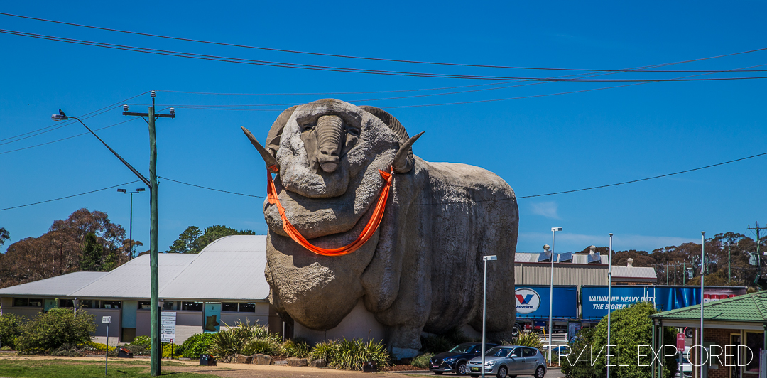 Goulburn - Big Merino
