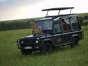 cheetah on bonnet 001 copy