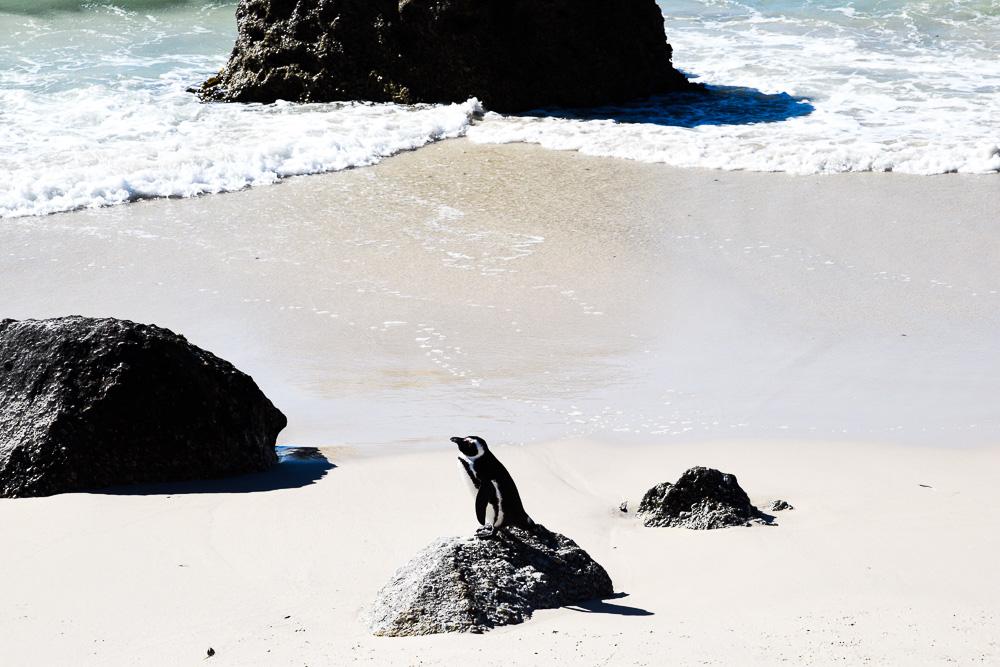 penguin sitting on a boulder