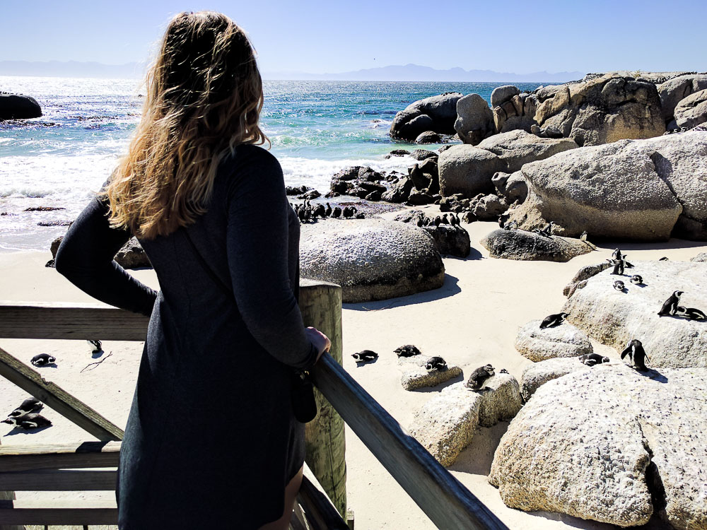 looking out from the boardwalk at boulders beach