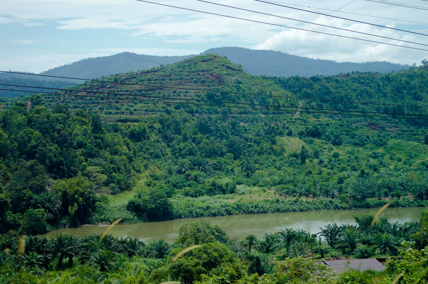 A palm oil plantation covering either side of the river