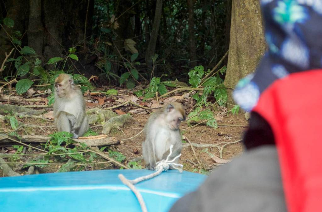 Macaque Monkeys sitting on end of tourist boat