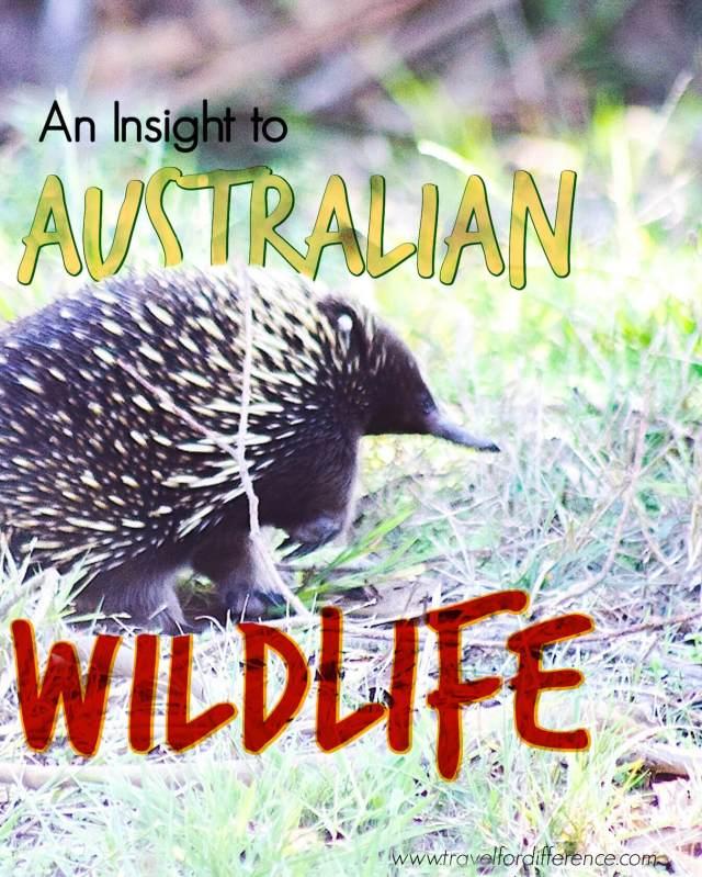 An Insight to Australian Wildlife - Australian Wildlife Facts