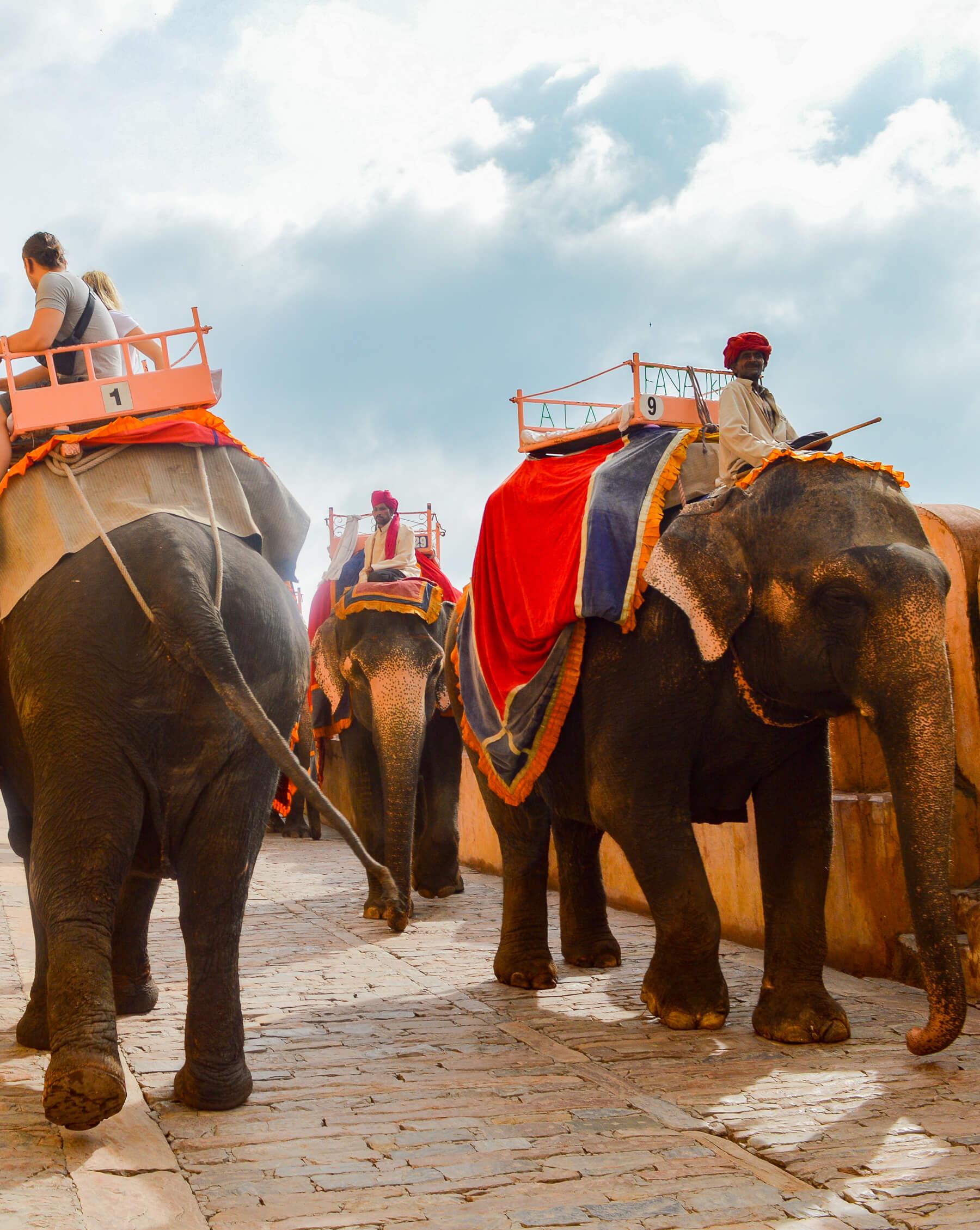 3 elephants walking down from fort