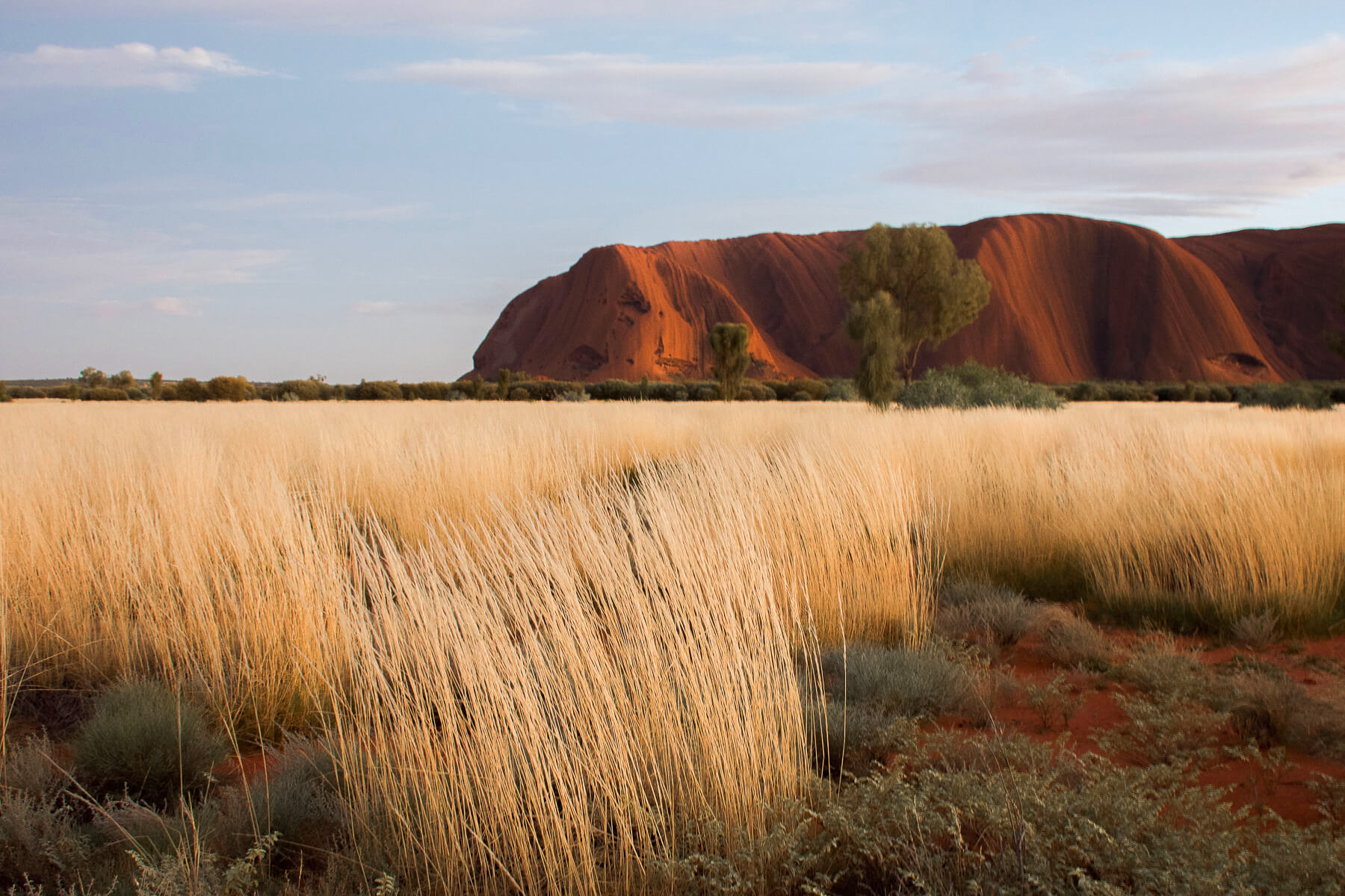 Red uluru infront of grass on a sunny day