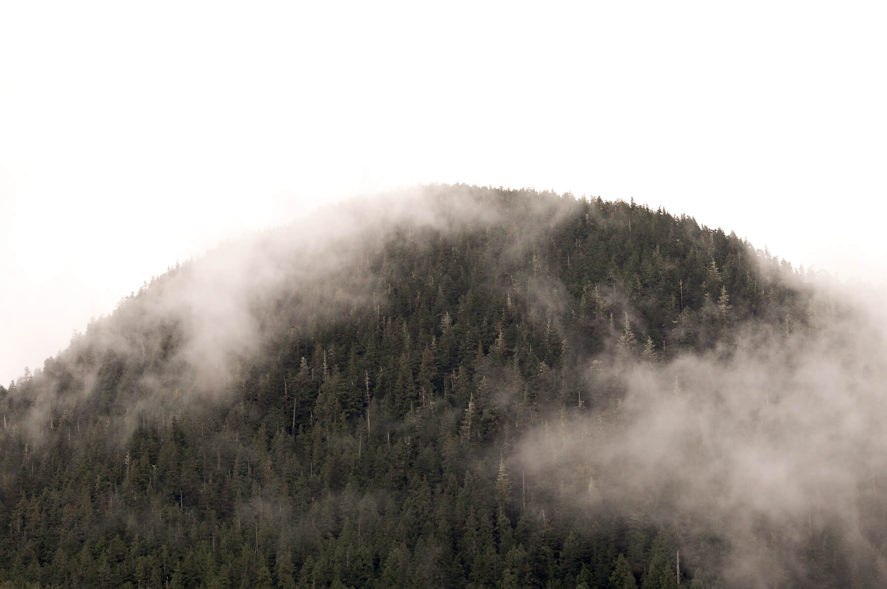 Round hill top covered in Sitka Trees with cloud hovering around the top