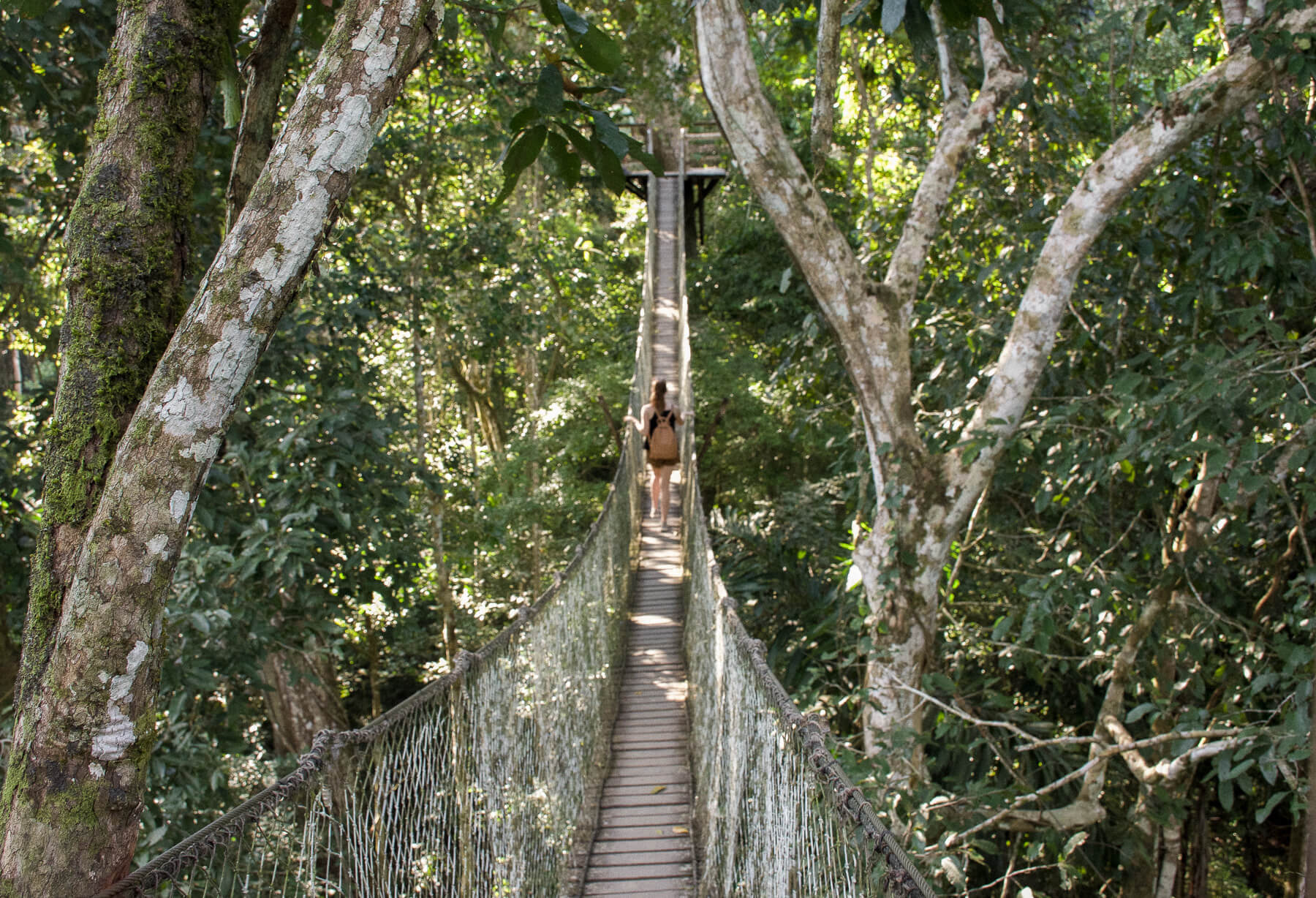 Girl walking across a rope bridge 10 stories high in the trees of the Amazon