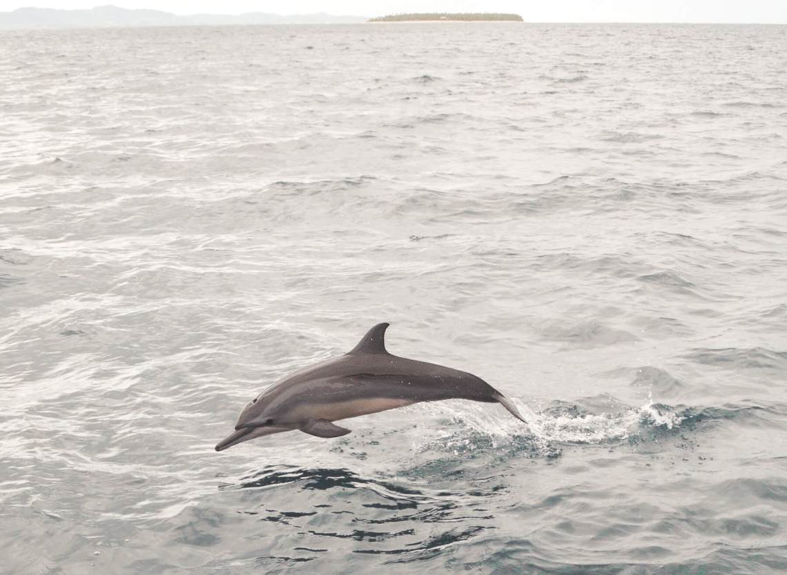 Small dolphin jumping out of the ocean with tiny island off in the distance