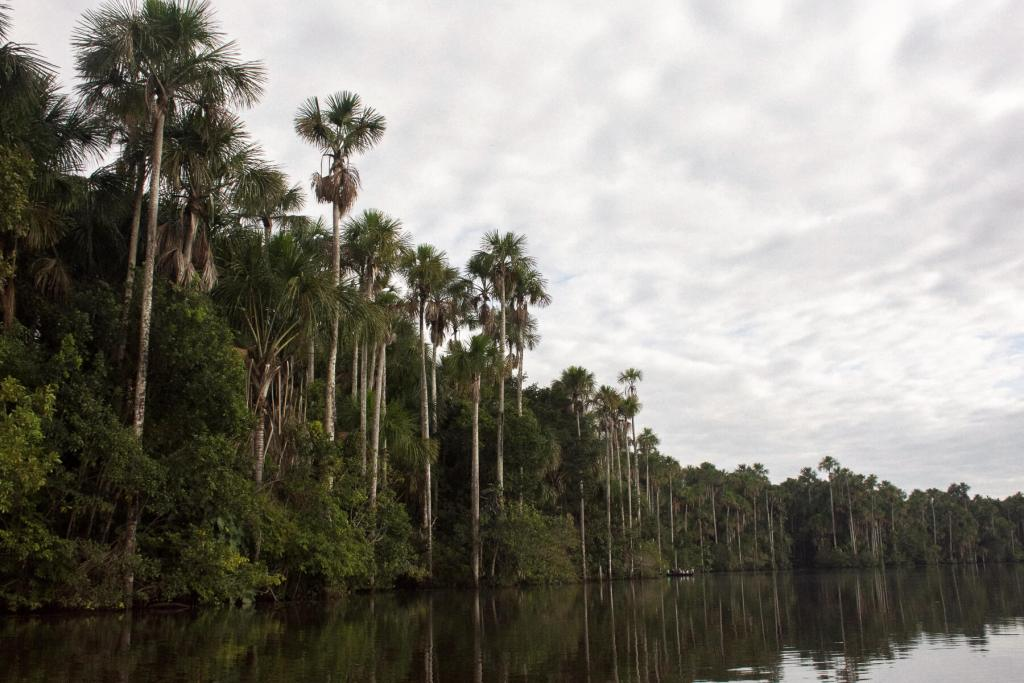 Super tall palm trees along the bank of Lake Sandoval