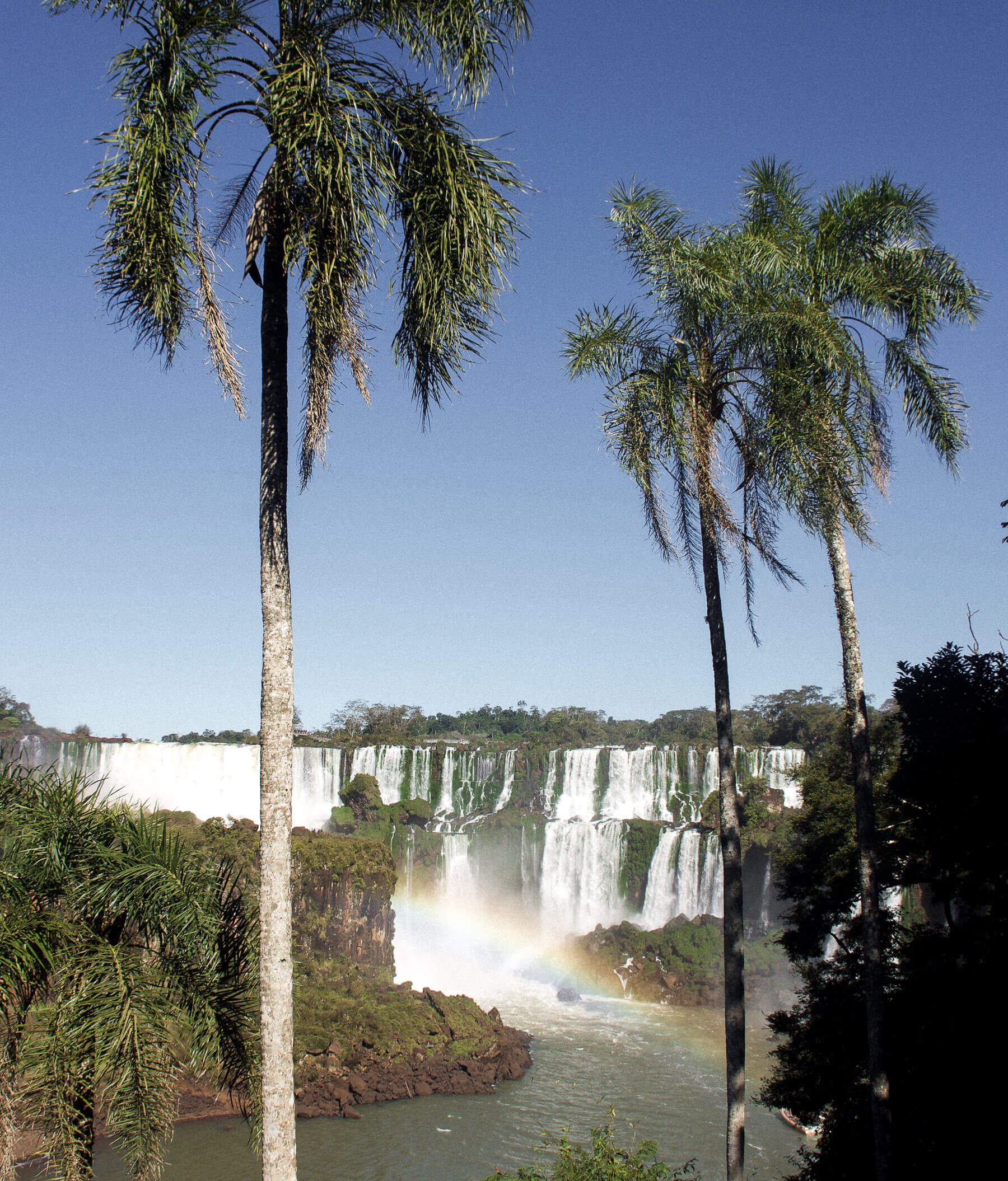 A huge waterfall and canyon, with rainbow and 2 tall Palm Trees infront